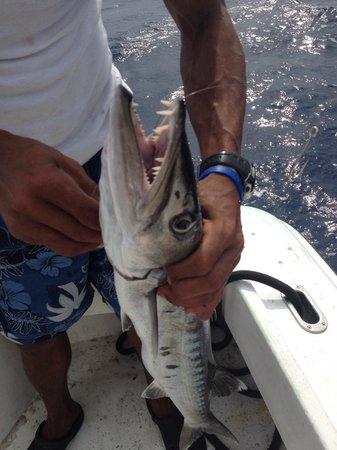 Roatan Anglers - Fishing Day Charters: Barracuda