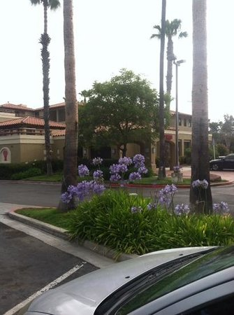 Holiday Inn Express Hotel & Suites Carlsbad Beach : pretty in purple at holiday inn expeess