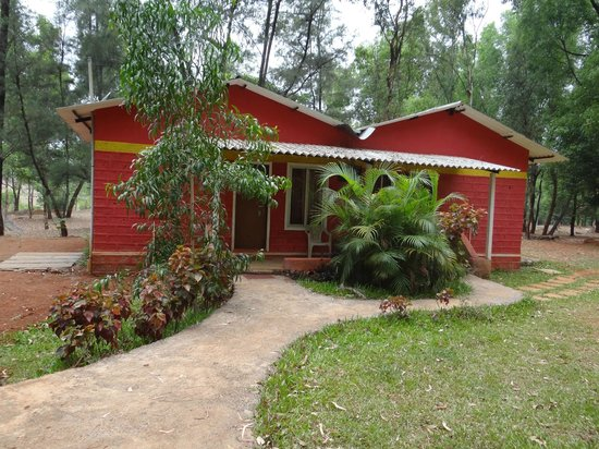 The Jungle Resort Amba : cottages