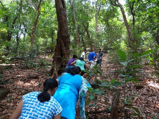 The Jungle Resort Amba : Jungle trek