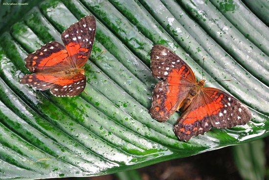 Fjarilshuset (Butterfly House)