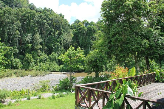 Borneo Rainforest Lodge: new from the room