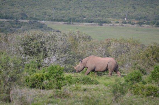River Bend Lodge: Black rhino