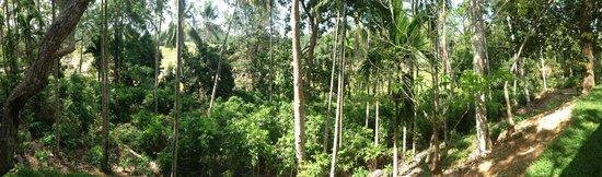 Kalahe House: Panoramic paddy views through mature trees