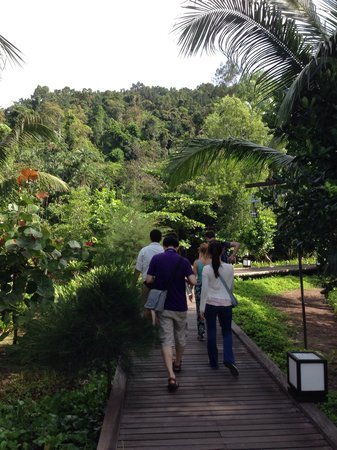 Gaya Island Resort: Guided Nature Walk