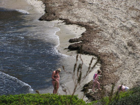 Club Hotel Tropicana Mallorca: The beach covered in a thick layer of debris