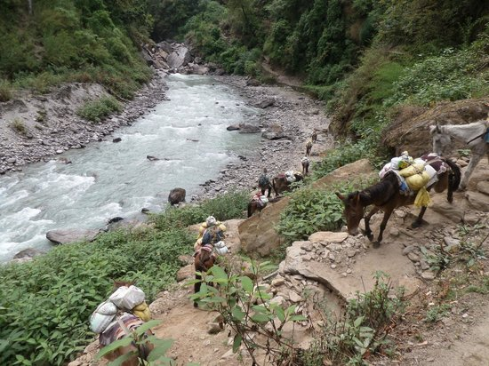 Earthbound Expeditions: Langtang donkey convoy