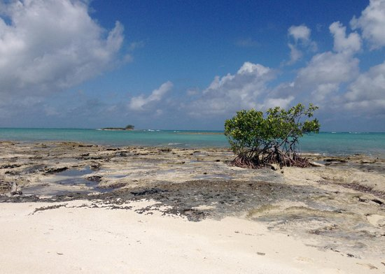 Melia Buenavista: playa oeste 1