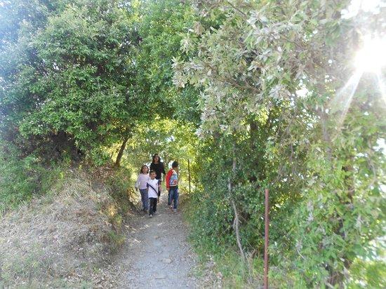The Oak Trails Eco Lodge : 14