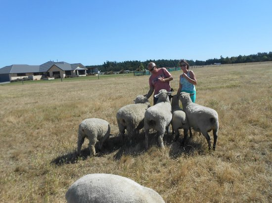 Pete's Farm Stay B&B: feeding the sheep