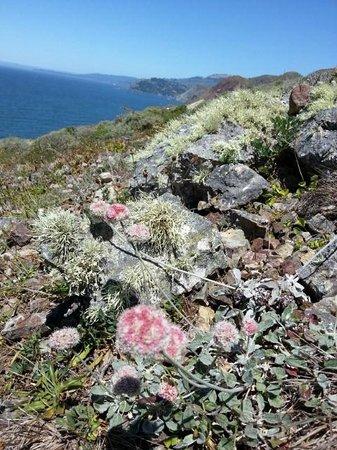 Marin Headlands: 絶景3