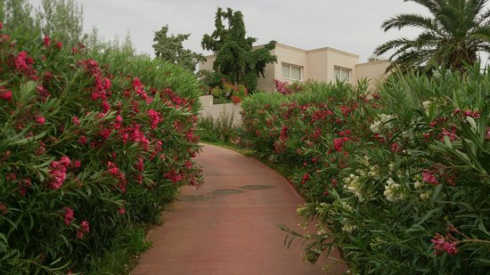 Out of the Blue Capsis Elite Resort: Garden
