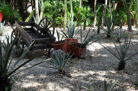 Viva Wyndham Maya: Past evidence