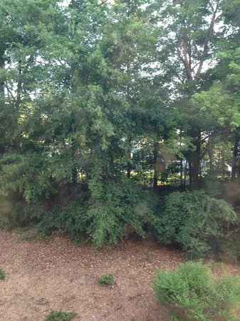 Staybridge Suites Durham-Chapel Hill-RTP: Outside our window