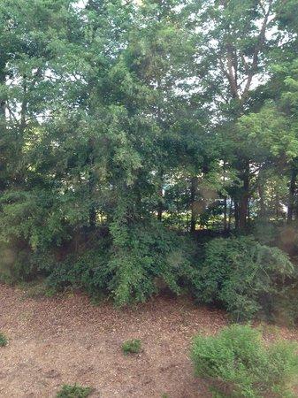 Staybridge Suites Durham-Chapel Hill-RTP : Outside our window
