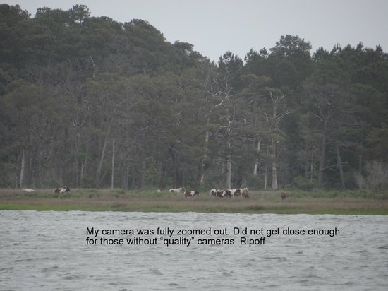 Assateague Explorer Wildlife Cruises: Need good zoom when on this