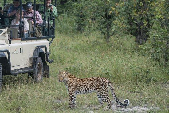 Wilderness Safaris Kings Pool Camp: Wildlife