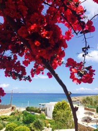 Ostria Inn: views