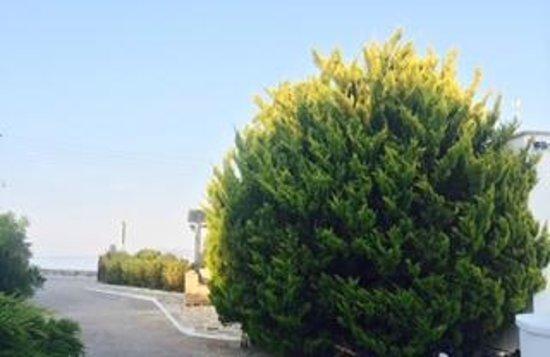 Ostria Inn: garden