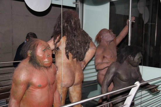 Maropeng Visitor Centre : Our ancestors