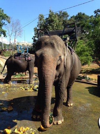 Prenn Falls: Éléphant