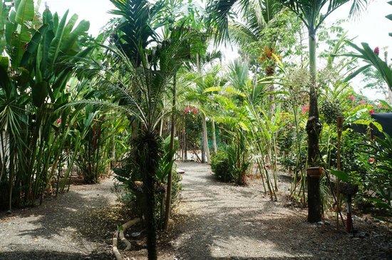 Cabinas Tropicales : Garden