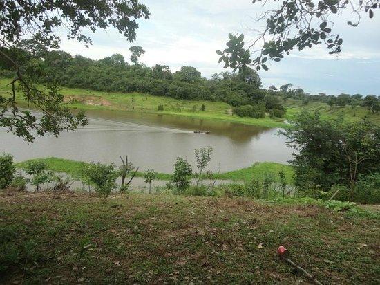 Amazon Rainforest: Contato com a Natureza