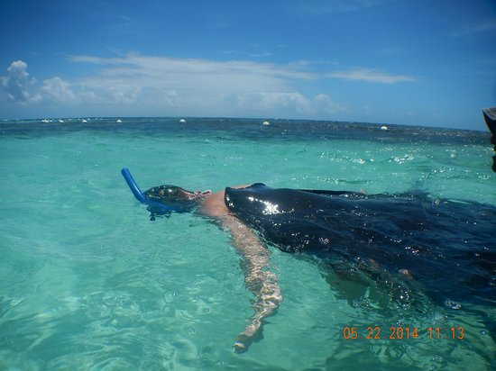 Stingray City : Honey, there's something on your back :)