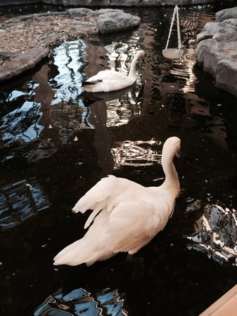 Embassy Suites by Hilton West Palm Beach Central : I loved the swans in the lobby.