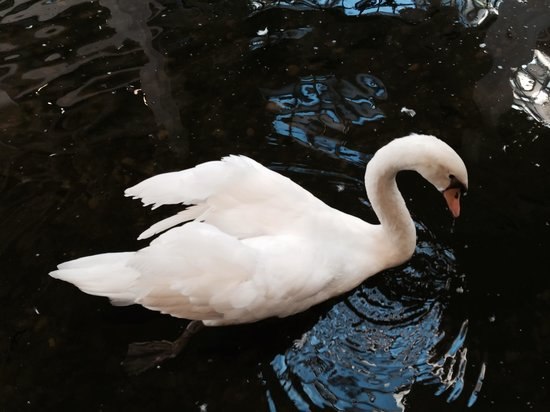 Embassy Suites by Hilton West Palm Beach Central: Sweet brother swans