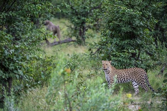 Wilderness Safaris Kings Pool Camp: Wildlife