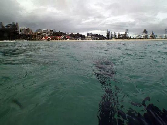 Kirra Beach : kirrs reef below