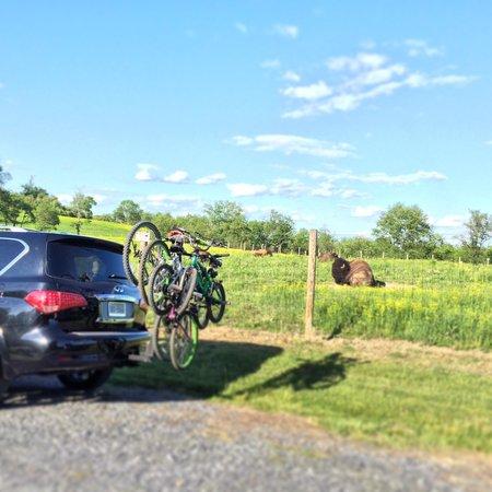Schnecksville, Pensylwania: After biking along the jordan creek, we took a drive thru the preserve