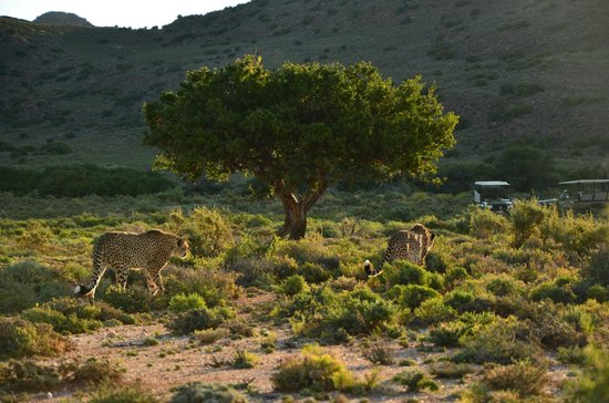Sanbona Wildlife Reserve: Here you can see wild living animals from closer than in many zoo.