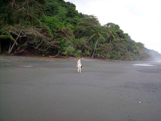 Corcovado National Park : Corcovado, Costa Rica