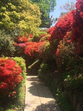 The Gotoh Museum: 庭園のつつじ
