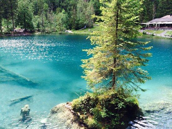blausee schweiz hotel mit im hintergrund fischen