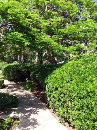 The Annabelle: Beautiful Mimosa Tree
