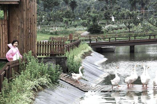 Sun Island Resorts : Mahota Farm