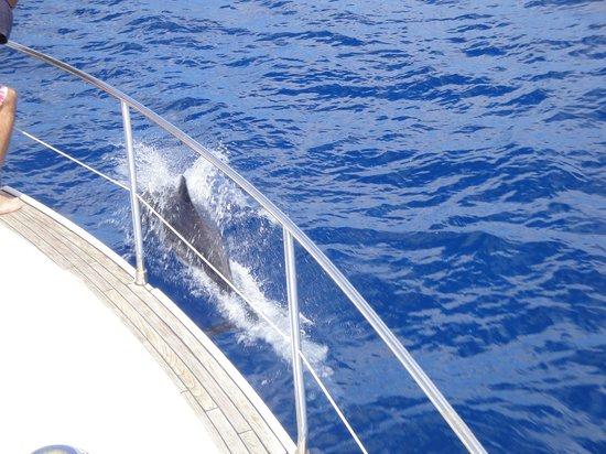 Pestana Porto Santo All Inclusive: A dolphin swimming next to the boat