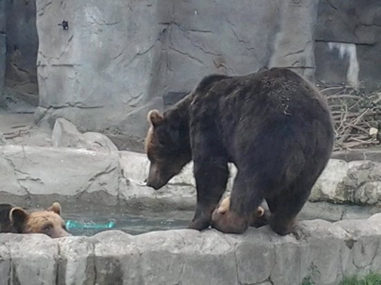 Detroit Zoo: Grizzley Bear