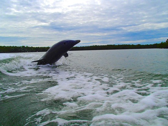 Capt. Ron's Awesome Everglades Adventures: Trust me - you'll see one of these!