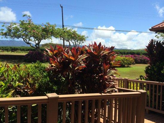 Kauai Coffee Company: Kauai Coffee ...