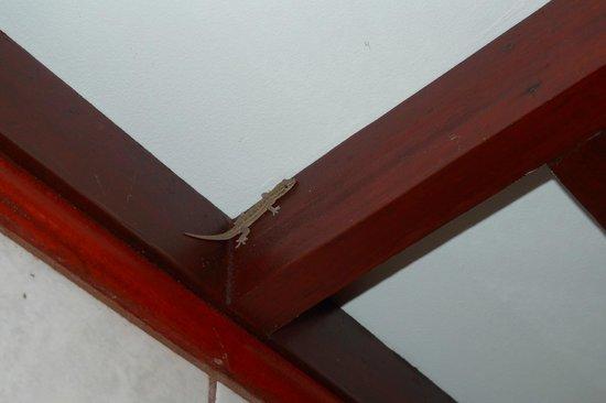 Hotel Playa Espadilla: night lizard