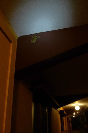 Hotel Playa Espadilla: gladiator frog on hotel wall