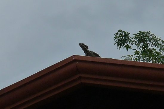 Hotel Playa Espadilla: lizard on bar roof
