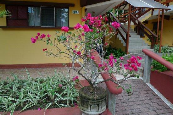 Hotel Playa Espadilla: nice bonzaï