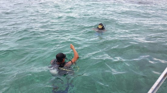Island Divers Belize: Rudy teaching our 11 year old to dive!