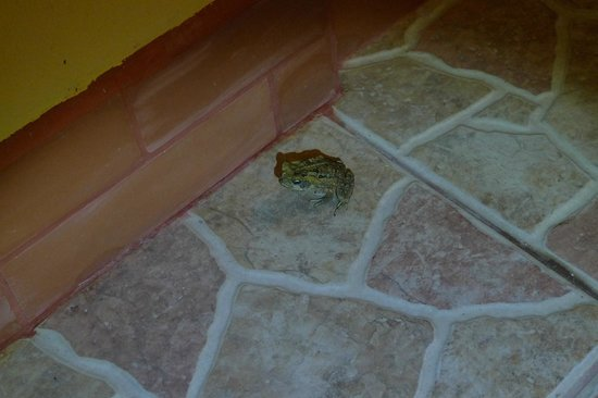 Hotel Playa Espadilla: toad