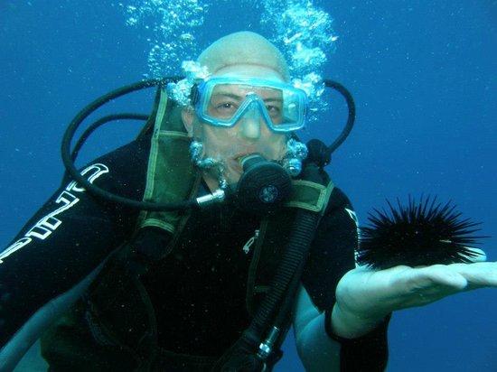 Nova Villa Tortuga: Buceando con un erizo de mar!